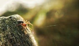 Araña que teje un Web Fotos de archivo libres de regalías