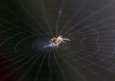 Araña que trabaja en su Web Imagen de archivo libre de regalías