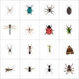 Araña realista, Damselfly, saltamontes y otros elementos del vector El sistema de símbolos realistas del insecto también incluye stock de ilustración