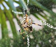 Araña, telaraña Imagen de archivo libre de regalías