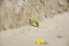 Araña verde Fotografía de archivo