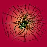 Araña verde en el Web Imagen de archivo