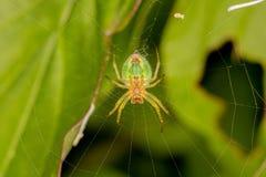 Araña verde espeluznante en un spiderweb imagen de archivo libre de regalías
