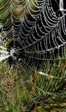 Araña-Web Foto de archivo libre de regalías
