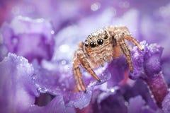 Araña y descensos brillantes del agua Fotos de archivo libres de regalías