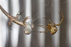 Araña y lagarto imágenes de archivo libres de regalías