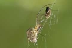 Araña y mosca foto de archivo