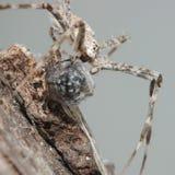 Araña y mosca Imagen de archivo libre de regalías
