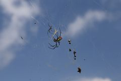 Araña y presa fotografía de archivo