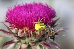 Araña y su presa Imagen de archivo libre de regalías