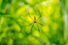 Araña y su Web Imágenes de archivo libres de regalías