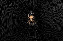 Araña y Web Foto de archivo libre de regalías