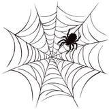 Araña y Web Foto de archivo