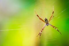 Araña y web de Brown Imágenes de archivo libres de regalías