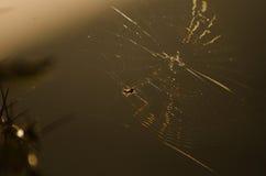 Araña y web de Hilighted Fotos de archivo libres de regalías