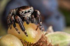 Araña y zarzamora verde fotografía de archivo
