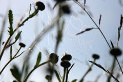 Arañas Fotografía de archivo