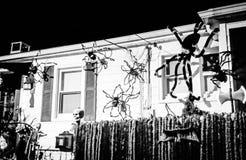 arañas Imagenes de archivo