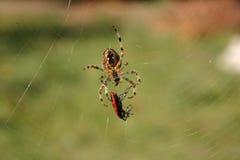 arañas Imagen de archivo libre de regalías
