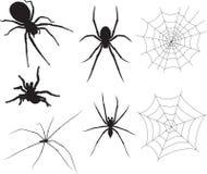 Arañas Foto de archivo libre de regalías