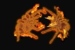 Arañas del fuego foto de archivo