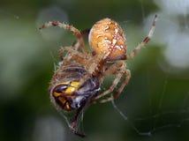 Arañas en la naturaleza Fotografía de archivo libre de regalías