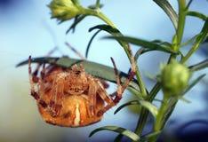 Arañas en la naturaleza Fotos de archivo libres de regalías