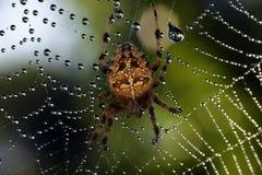 Arañas en la naturaleza Foto de archivo libre de regalías