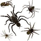 Arañas fijadas Fotos de archivo libres de regalías