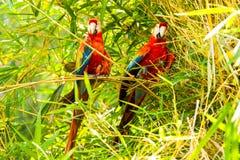 Ara金刚鹦鹉对在亚马逊盆地的鸟 免版税库存照片