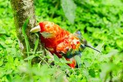 Ara金刚鹦鹉鸟在似亚马逊密林 免版税库存照片