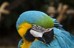 Ara σε Iguacu Στοκ Φωτογραφίες