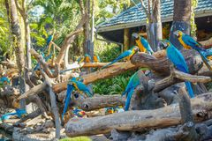 Ara - beaux perroquets tropicaux photos libres de droits