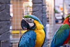 Ara bleu et jaune dans le zoo Image libre de droits