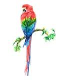 Ara del pappagallo dell'acquerello Immagine Stock