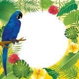 Ara et plantes tropicales bleus Photos libres de droits