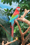 Ara macao. Beautiful southern bird sitting on a tree branch Stock Images