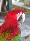 Portrait of Ara or Macaw Royalty Free Stock Photography