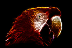 Ara Macaw Fractals. The Scarlet Macaw Is A Large Colorful Macaw It Is Native To Humid Evergreen Forests In The American Tropics Range royalty free stock images