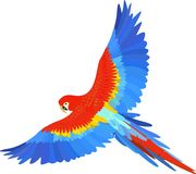 Ara macaw parrot spread wings vector Royalty Free Stock Images