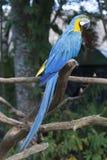 Ara op een boom Stock Afbeelding