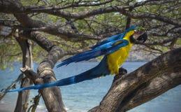 Ara op een boom op het strand Stock Afbeeldingen