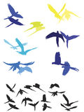 Ara pair flying silhouettes Stock Photo