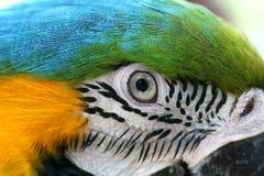 ara papegaai Royalty-vrije Stock Foto