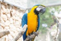 Ara Parrot Stock Photo