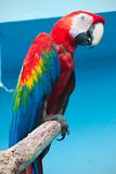 Ara parrot Stock Photography