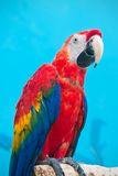 Ara parrot Stock Photos