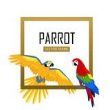 Ara Parrot Flat Design Vector Illustration Royalty Free Stock Image