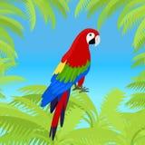 Ara Parrot Flat Design Vector Illustration Royalty Free Stock Photos