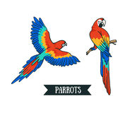 Ara parrot. Isolated vector tropical design element. Stock Photos
